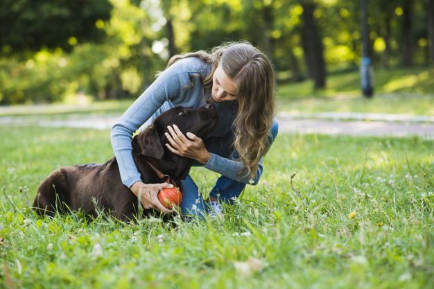 aktivitetslegetøj til hunde