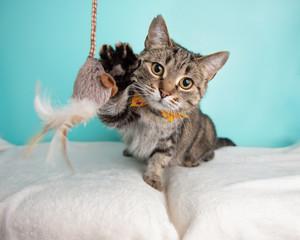 kat leger med legetøj